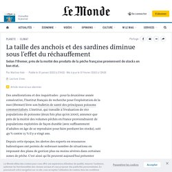 LEMONDE 31/01/20 La taille des anchois et des sardines diminue sous l'effet du réchauffement