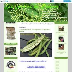 Le plus ancien de nos légumes : la fève des marais