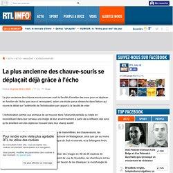 La plus ancienne des chauve-souris se déplaçait déjà grâce à l'écho - RTL Info