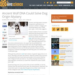 Ancient Wolf DNA Could Solve Dog Origin Mystery