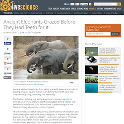 Ancient Elephants Grazed Before They Had Teeth for It