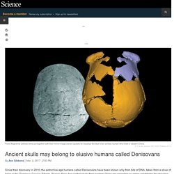 Ancient skulls may belong to elusive humans called Denisovans
