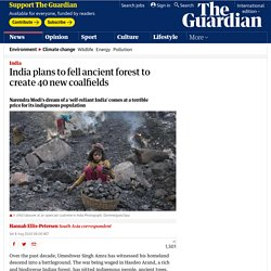 india to fell ancient forest for new coalfields