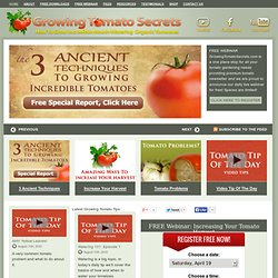 Ancient Tomato Growing Secrets Increase Your Tomatoes and Keeps Plants Healthy