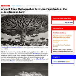 Ancient Trees: Photographer Beth Moon's portraits of the oldest trees on Earth