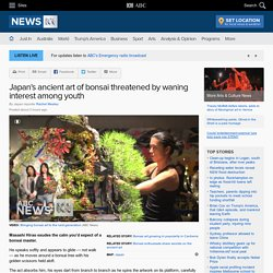Japan's ancient art of bonsai threatened by waning interest among youth