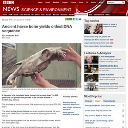 Ancient horse bone yields oldest DNA sequence