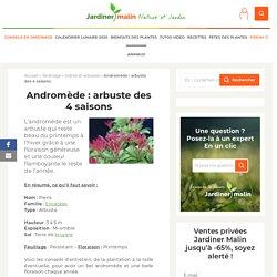 Andromède : plantation, taille et conseils d'entretien