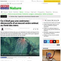 Ce n'était pas une anémone : découverte d'un nouvel ordre animal au fond des mers