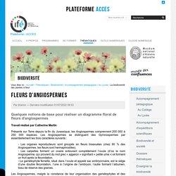Quelques notions de base pour réaliser un diagramme floral de fleurs d'angiospermes – Access ENS Lyon