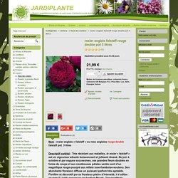 rosier anglais falstaff rouge double pot 3 litres - JARDIPLANTE