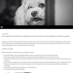 Der Angsthund: Ursachen von Angst beim Hund und wie man mit ängstlichen Hunden umgeht - Weltstadt mit Hund - Mobile Hundeschule in München