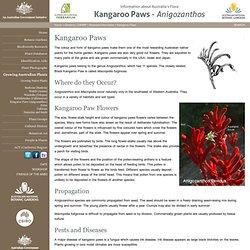 Kangaroo Paws - Anigozanthos - Australian Plant Information