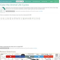 Animal Life Cycle Coloring Pages