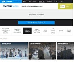 Ocean Animal Encyclopedia