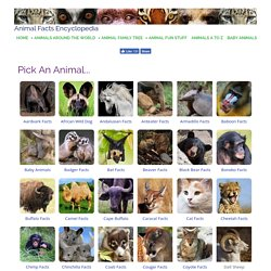 Animal Facts Encyclopedia