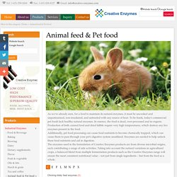 Animal feed & pet food-Creative Enzyme