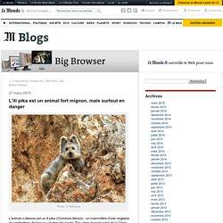 L'ili pika est un animal fort mignon, mais surtout en danger