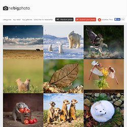 Animal Photography Archives