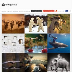 animal photography & 2/2 & one big photo
