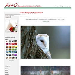 Animal Photography by Don Hooper - AmO Images: Capturing the Beauty of Life - AmO Images: Capturing the Beauty of Life