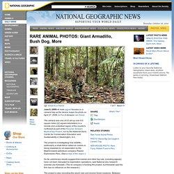 RARE ANIMAL PHOTOS: Giant Armadillo, Bush Dog, More