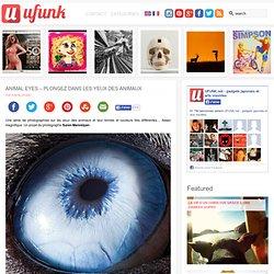 Animal eyes – Plongez dans les yeux des animaux