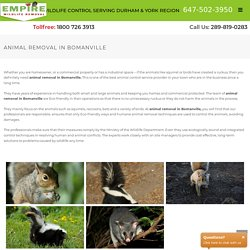 Animal Removal in Bomanville
