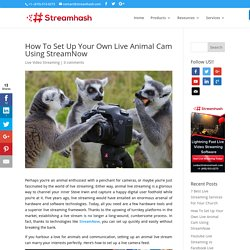 How To Set Up Your Own Live Animal Cam Using StreamNow - StreamHash