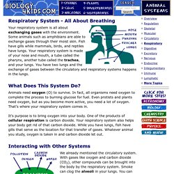 Animal Systems: Respiratory System