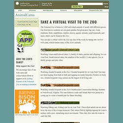 Animal Web Cams at the National Zoo