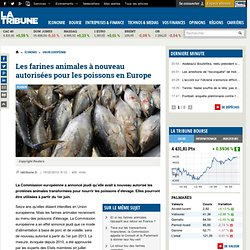 Les farines animales à nouveau autorisées pour les poissons en Europe