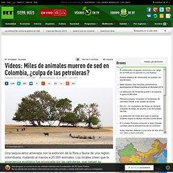 Videos: Miles de animales mueren de sed en Colombia, ¿culpa de las petroleras?