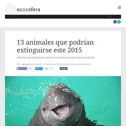 13 animales que podrían extinguirse este 2015