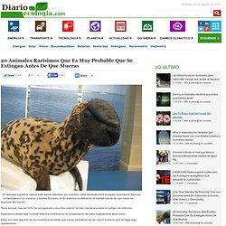 20 Animales Rarísimos Que Es Muy Probable Que Se Extingan Antes De Que Mueras