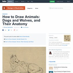 How to Draw Animals: Dogs and Wolves, and Their Anatomy