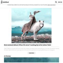 How Animals Behave When We Aren't Looking By Artist Julien Tabet