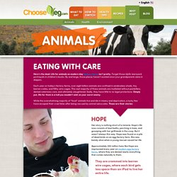 Animals - ChooseVeg.com
