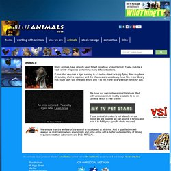 Blue Animals Chromakey Stock Footage Our Animals