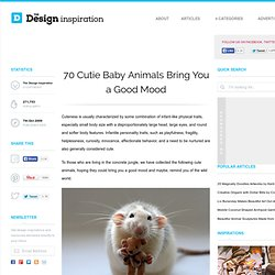 70 Cutie Baby Animals Bring You a Good Mood | The Design Inspiration - StumbleUpon