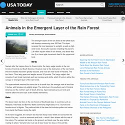 Animals in the Emergent Layer of the Rain Forest