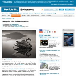 Deadly lake turns animals into statues - environment - 01 October 2013