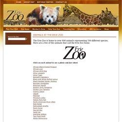 Erie Zoo