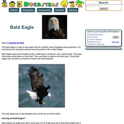 Animals for Kids: Bald Eagle