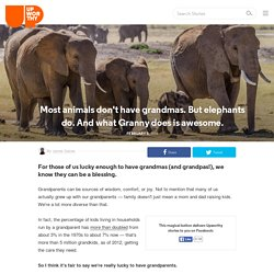 Elephants have Grandmas -and need them