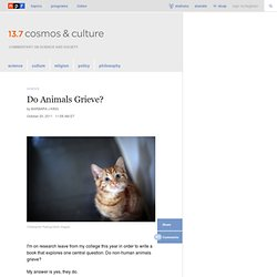 Do Animals Grieve? : 13.7: Cosmos And Culture