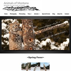 Welcome to Animals of Montana