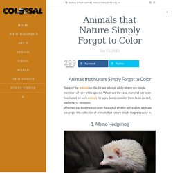 Animals that Nature Simply Forgot to Color