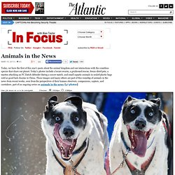 Animals in the News - In Focus