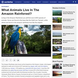 What Animals Live In The Amazon Rainforest? - WorldAtlas.com